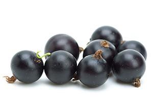 Польза черной смородины